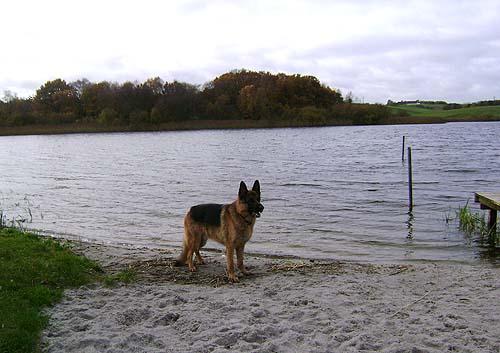 efterår sø og hund 2