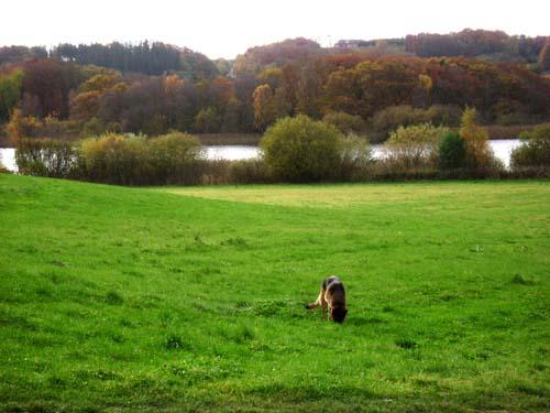 efterår sø og hund