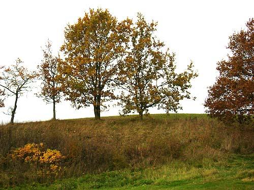 efterår træer