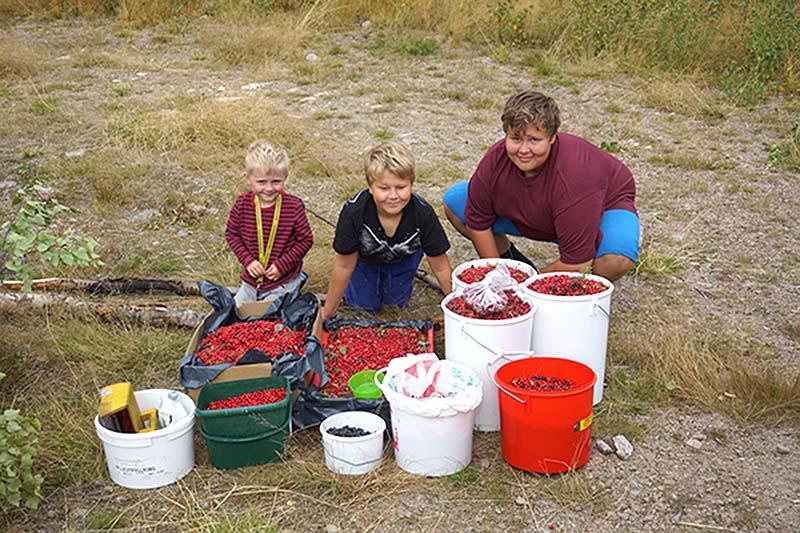 Victor 70 kg tyttebær